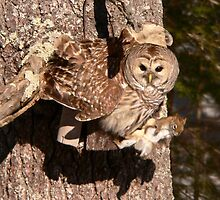 2009 02 Barred Owl  by yeimaya