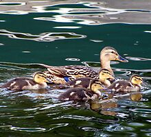 Mallard Family by Rose Gallik