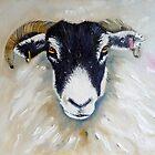 Swaledale Ewe by Sue Nichol