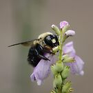 BIG BEE !!! by AnnDixon