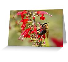 Bee in its Elements Greeting Card