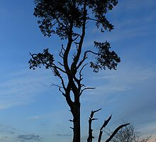 The resting tree - Walking out of Frensham woods - 3/8 by pathseeker