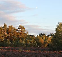 The turn for home - Walking out of Frensham woods - 1/8 by pathseeker