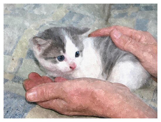 Kitten in Hands at a Farmstead in Romania by Dennis Melling
