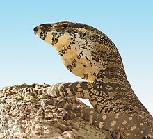 Lace monitor up a tree. by Dean Baxter
