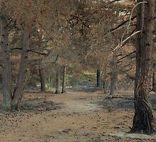 The entrance - Walking into Frensham woods - 1/8 by pathseeker