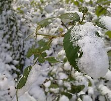 Nettles in a Winter Wonderland by claaa