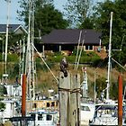 Juvenile Eagle on Perch over Working Harbor (Masset, Haida Gwaii, British Columbia, Canada, August 2010) by Edward A. Lentz