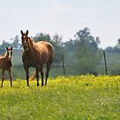 Kentucky Afternoon by Laura  Donnell