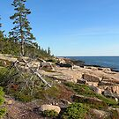 'Western Shore, Schoodic Peninsula' by Scott Bricker