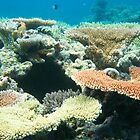 Flynn Reef, Cairns QLD by sharonjr