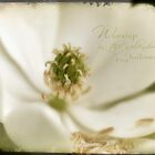 Magnolia White by JulieLegg