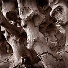 Roots of Anger by David Kocherhans