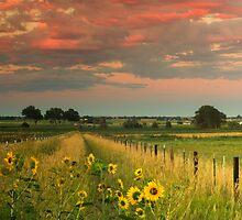 Under The Summer Sky by John  De Bord Photography