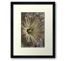 June's Daffodil Framed Print