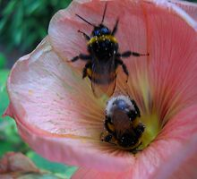 Bee Couple. by Vitta