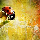 Painted Ladybug by Dragos Dumitrascu