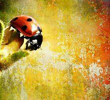 Painted Ladybug by Dragos Dumitrascu