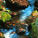 Mountain stream,Roaring Fork by Chuck Wickham