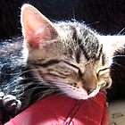 Wherever I lay my cat (that`s my home) by Ladymoose
