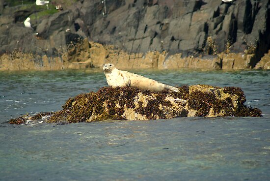 Grey Seal Pup ~ Farne Islands ~ by Sandra Cockayne