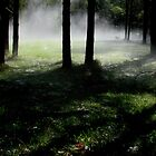 Foggy Forest by Louise Linossi Telfer