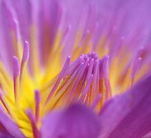 purple flame by Iris Mackenzie
