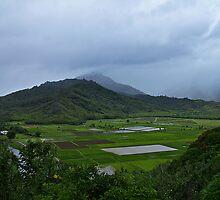 Taro Plantation @ Hanalie by cvrestan
