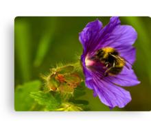 The Pollen Collector Canvas Print