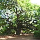 Angel Oak by Elise Armstrong