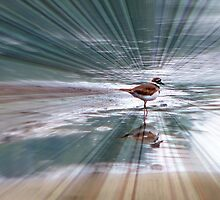 The Shining Killdeer by DottieDees