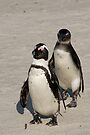 African Penguins (formerly known as Jackass Penguins) by Neville Jones