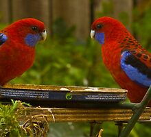 Beauty comes in a pair by Jan Clarke