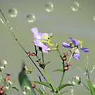 Tiny Beauties by Pat Moore