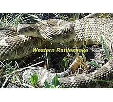 Western Rattlesnake Photographic Print
