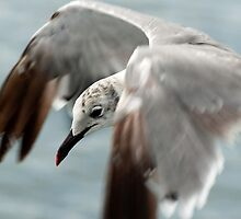 Up Close and Personal by Robert H Carney