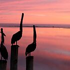 pelican sunset by waussie