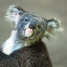 My favourite animal by loiteke