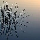 Water Spider by Greg Halliday