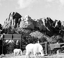 Mount Rushmore Goats by Blake  Hyland
