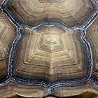 symmetry by yvesrossetti
