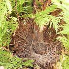 Birds nest by Suzy1