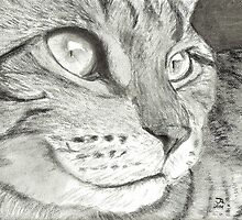 Cat Profile by Drawing