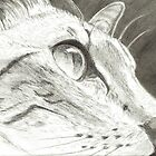 Cat Profile Art Drawing by Drawing