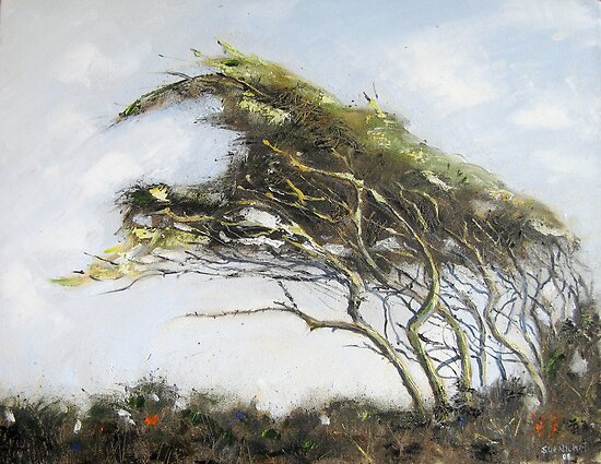 Cornish Hawthorn by Sue Nichol