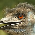 Dirty Emu by vasu