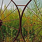 A View through the Fence by Susan Blevins