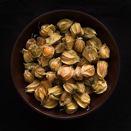physalis by Dave Milnes