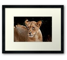 Looking gorgeous Framed Print