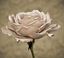 """"""" Second Hand Rose """" by CanyonWind"""